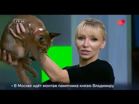 Каракет ф1 Каталея Элизабет на ТВ канале Москва 24