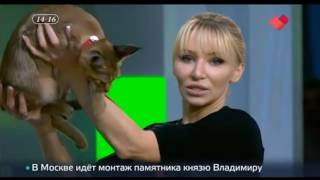 """Каракет ф1 """"Каталея Элизабет"""" на ТВ канале """"Москва 24"""""""