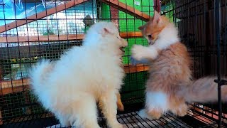 Crazy  Cat And Dog Video- Funny Cats vs Dogs - Funny Animals Compilation
