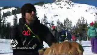 Search And Rescue Dog Training At Alpine Meadows