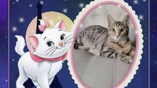 """Мультик-сказка """"Осенняя котоматрица"""". Красивый ролик о жизни кошек."""
