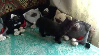 Подушка кот.Кошка+котоподушки. Оригинальный подарок.Pillow cat