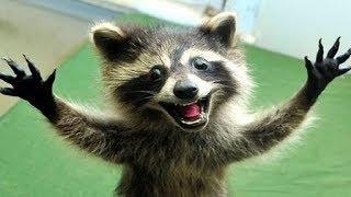 Топ Животных 10 Экзотических | домашние экзотические животные видео