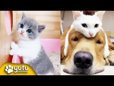 Funny Cat Videos | Cat Fight | Cute Cats By yutu animals