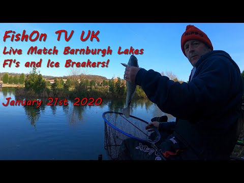 FishOn TV UK : Barnburgh Lakes : Live Match Fishing : F1's And Ice Breakers.  January 2020