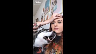 SIBERIAN HUSKIES BEING DRAMATIC FOR 8 MINUTES AND 53 SECONDS STRAIGHT