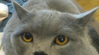 Первое знакомство кота Пуфика с сынулей
