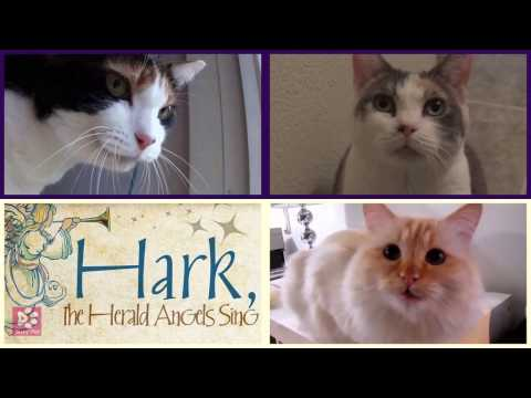 Cats Meowing HARK! THE HERALD ANGELS SING [Christmas Song] (Acapella)