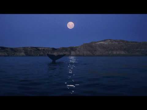 Wonderful Life - Katie Melua
