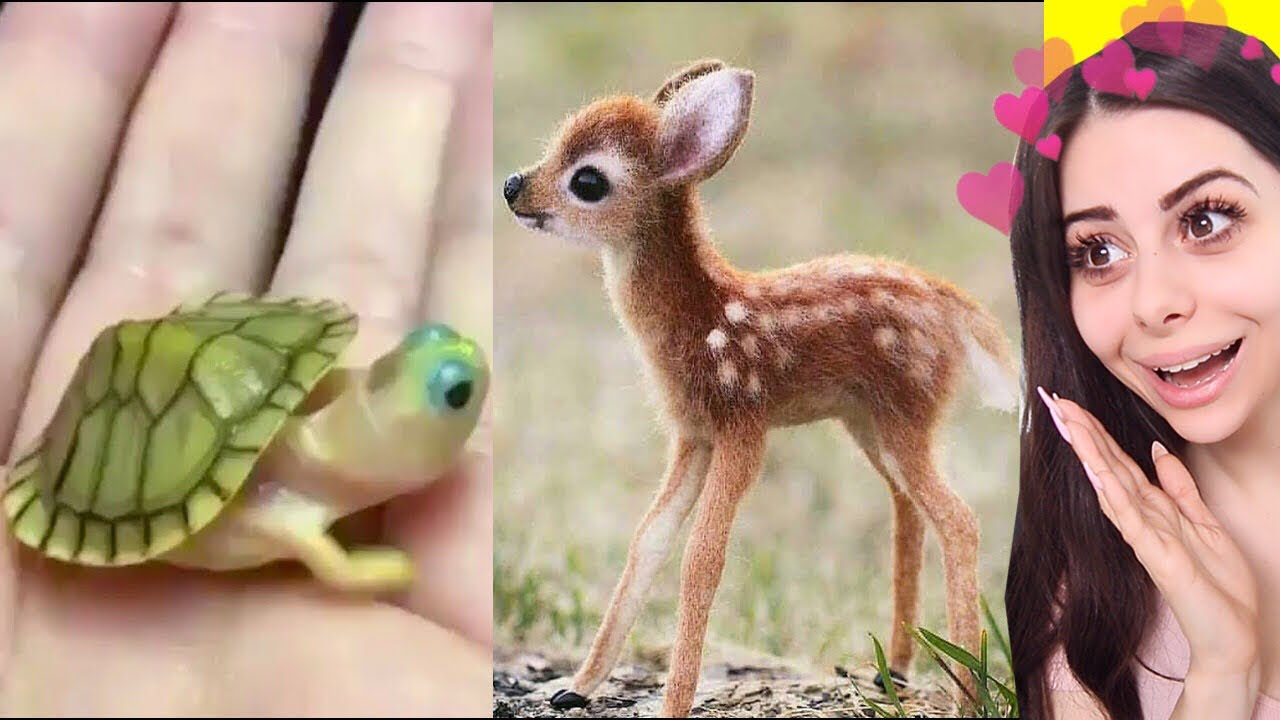Cute BABY ANIMAL Moments Video Compilation - YouTube
