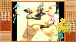 When we fall in love Funny Dog Videos. Funny Cats und Kittens Video...