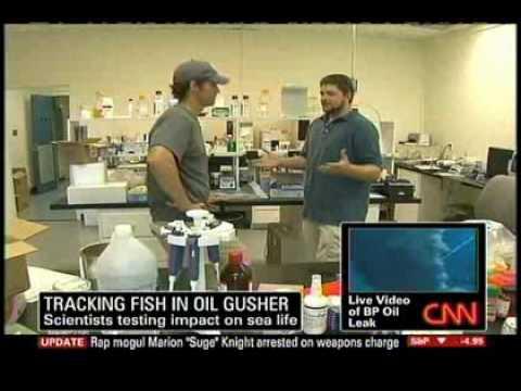 Deepwater Horizon - May 20, 2010 -CNN-Fishermen getting sick, fish dying
