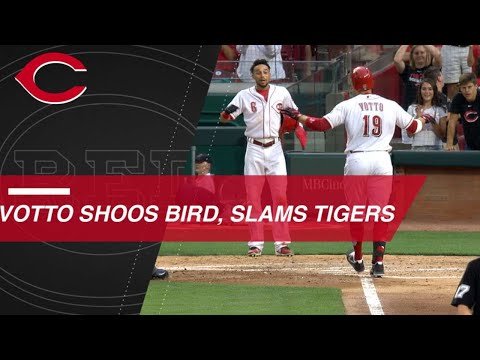 Joey Votto shoos bird before hitting a grand slam