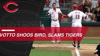 Joey Votto shoos bird before hitting a grand slam