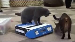 Piçlik Yapan Kediler
