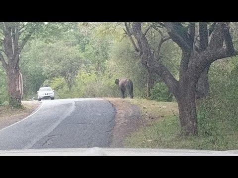 Elephant - Sathyamangalam Aasanoor Forest