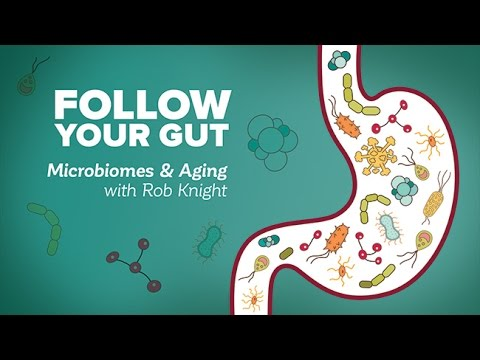Follow Your Gut: Microbiomes and Aging with Rob Knight  Research  Aging