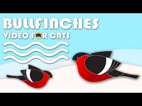 ENTERTAINMENT VIDEO FOR CATS: Cat Games on Screen - Bullfinches.