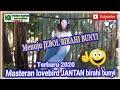 Masteran Lovebird Jantan Birahi Bunyi  Menuju Konslet Alami  Mp3 - Mp4 Download