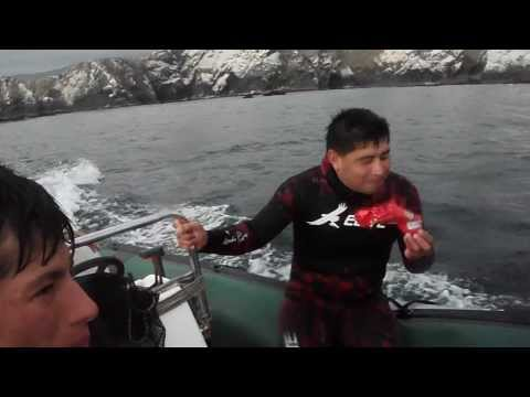 Spearfishing Mollendo