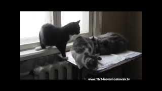 бездомные кошки и собаки Новомосковска