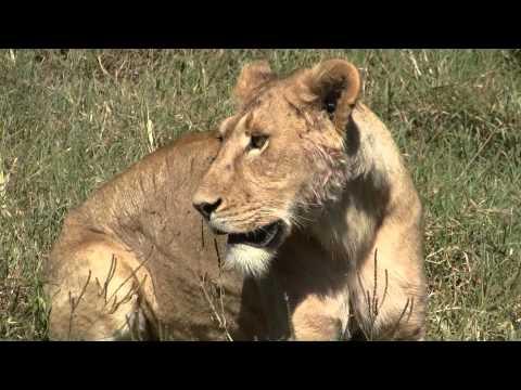 Africa - Big Five