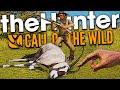 The Hunter Call Of The Wild | NEW ANIMAL & CROSSBOW VS JACKAL!!