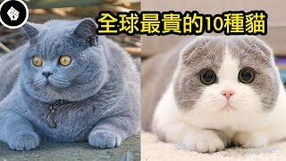 全球最貴的10種貓牠們都是可愛的代表呀