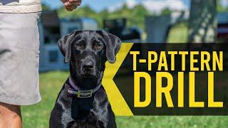 T Pattern Drill  Duck Dog Training