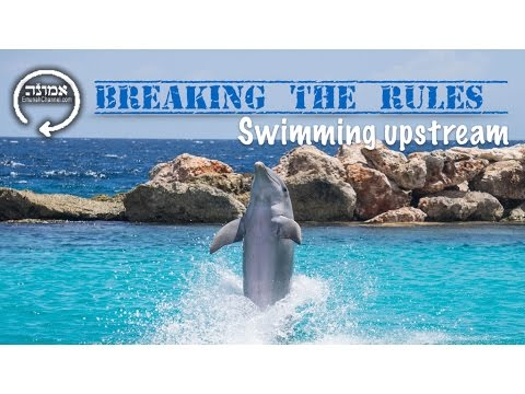 Breaking the rules | Swimming upstream