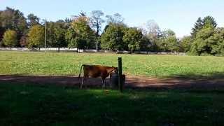 CHERRY GROVE DAIRY FARM NJ