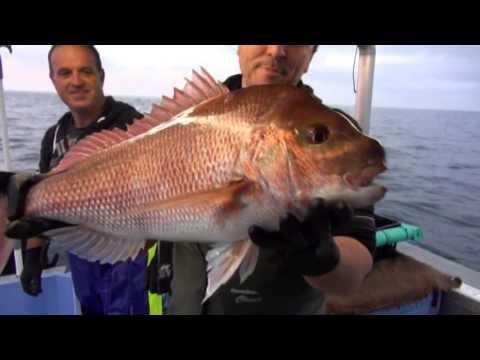 The Australian seafood Episode 2