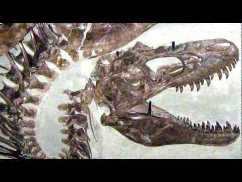 Death Throes -- Dinosaur fossil posture suggests asphyxiation