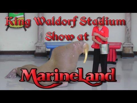 Marineland Canada King Waldorf Stadium Show - July 2015 (FULL SHOW)