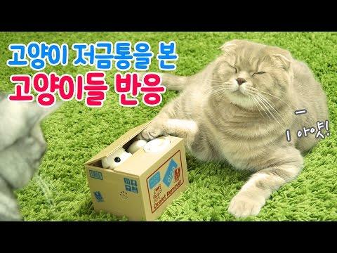 움직이는 고양이 저금통 본 수리노을가족 반응은?