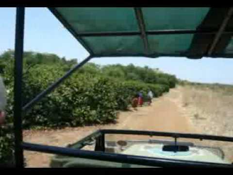 Zambia Coffee Buying Trip