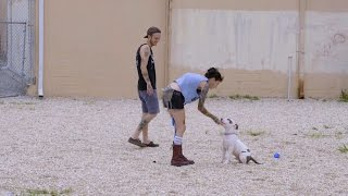 Obedience Training with Prince Jr. | Pit Bulls and Parolees