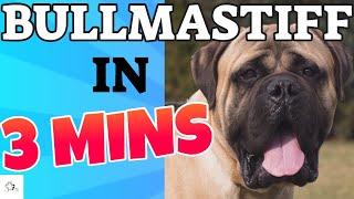 BULLMASTIFF Dog Breed in 3 Minutes (2021)!  About theBullmastiff Dogs in short!