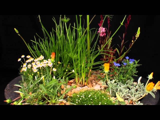 time laps blooming flower :Pépinières de Kervouric