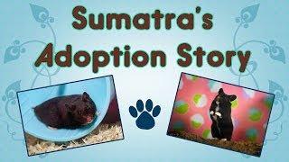 ♥ Sumatra