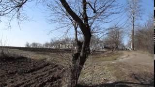 Обрезка абрикоса (легкая)(Моя страница ВКонтакте: https://vk.com/brybak Начну с того, что данный абрикос имеет очень странные плоды - после того..., 2015-03-31T16:00:00.000Z)
