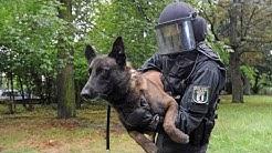Polizeihunde in der Ausbildung - Nur die besten kommen weiter!  - (DOKUMENTATION 2016 HD *NEU*)