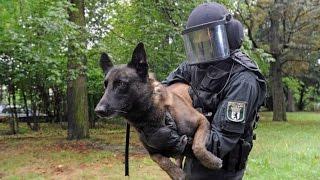 Polizeihunde in der Ausbildung - Nur die besten kommen weiter!  - DOKUMENTATION 2016 HD *NEU*