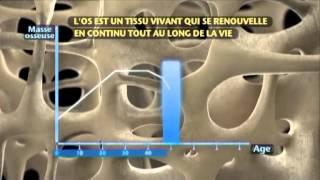 L'os un tissu vivant -- Qualité et résistance osseuses -- Servier TechBlog