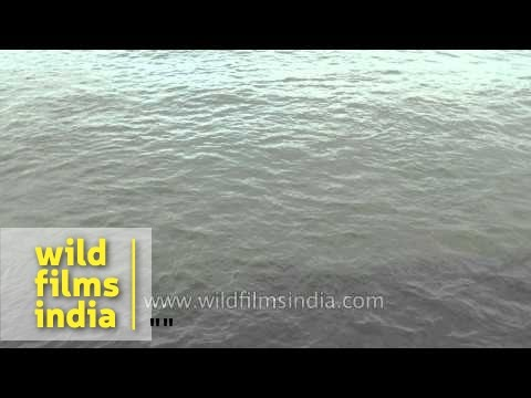 Water flowing in slow motion - Kallada River, Kollam