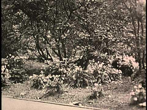 """Morning show"" - Stanley Park and Queen Elizabeth Park part #1"