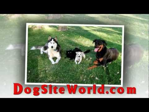 Dog Site World Pet Store - Top Online Dog Store - Top Dog Store
