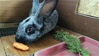 Кролики - как с ними подружиться/Имена для кроликов