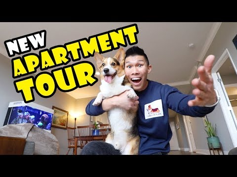 New SF Apartment Tour—8 Years After College w/Corgi || Extra After College