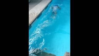 Amo's swimming lesson @ chito rivera(2)
